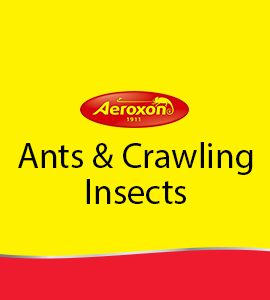Ants & Crawling Insects